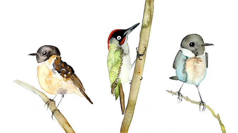 toon-vogels-web