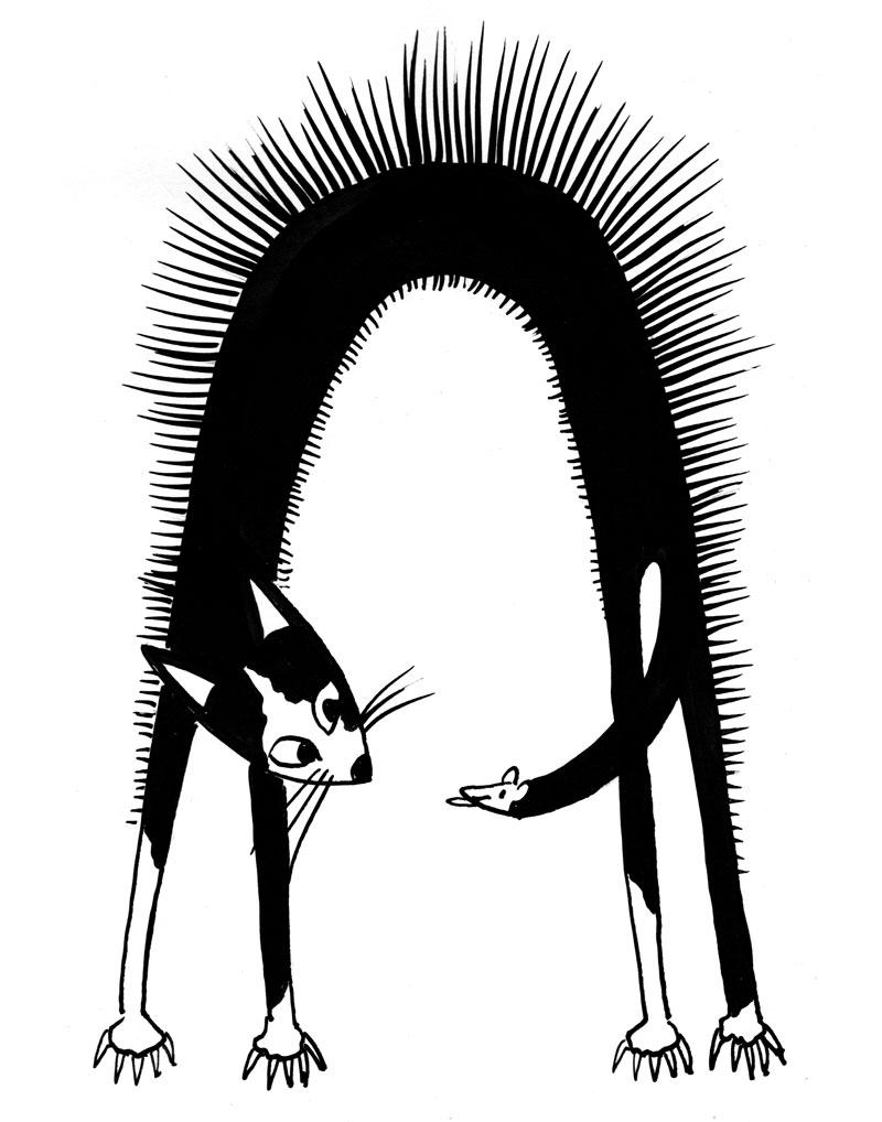 kat.web