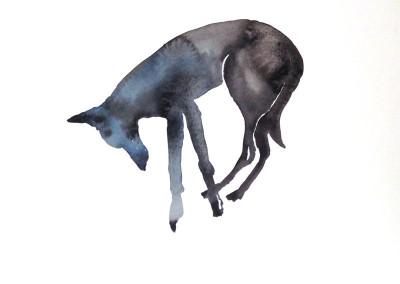 Honden en andere dieren