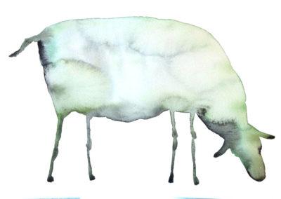 groen-schaap.w